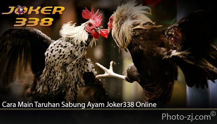 Cara Main Taruhan Sabung Ayam Joker338 Online